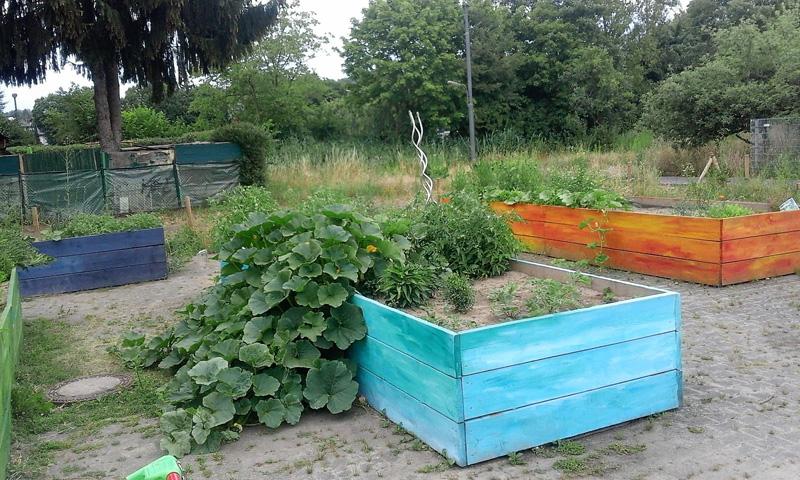 Gartenbegeisterte Freizeit-Helden für interkulturellen Garten gesucht